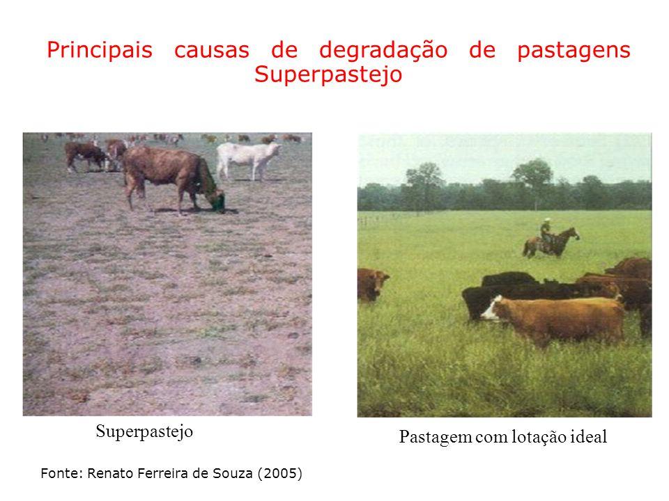 Principais causas de degradação de pastagens Superpastejo Superpastejo Pastagem com lotação ideal Fonte: Renato Ferreira de Souza (2005)