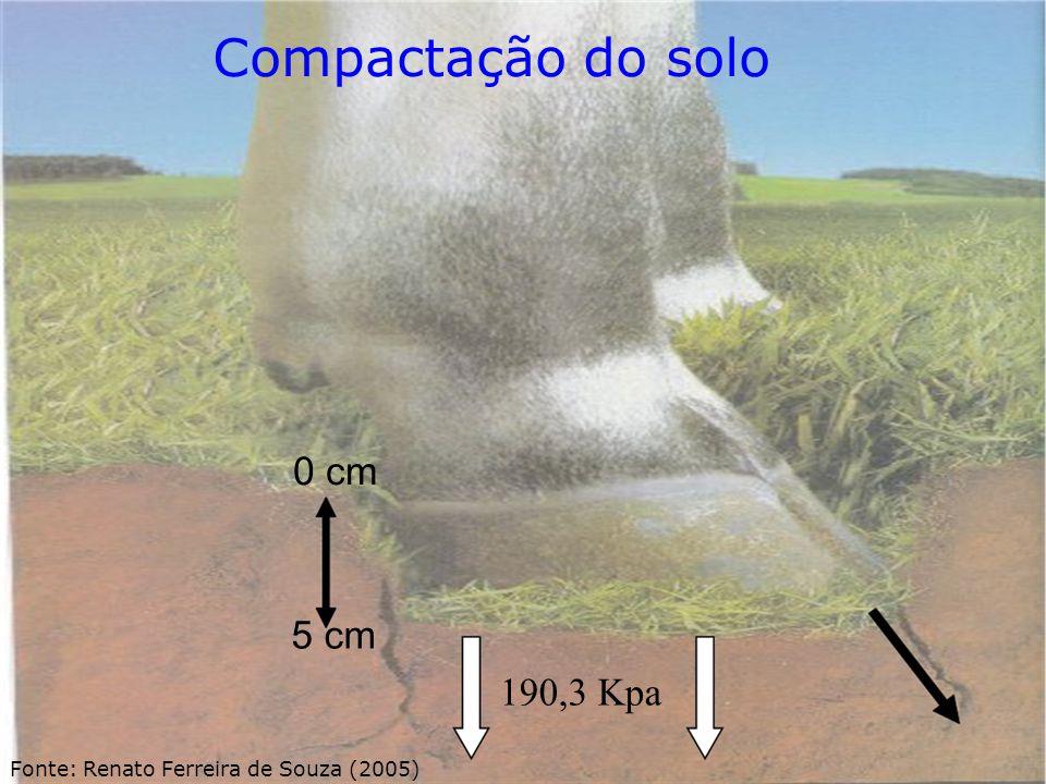 Compactação do solo 0 cm 5 cm 190,3 Kpa Fonte: Renato Ferreira de Souza (2005)