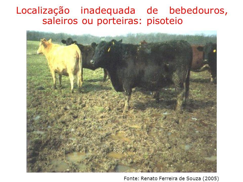 Localização inadequada de bebedouros, saleiros ou porteiras: pisoteio Fonte: Renato Ferreira de Souza (2005)