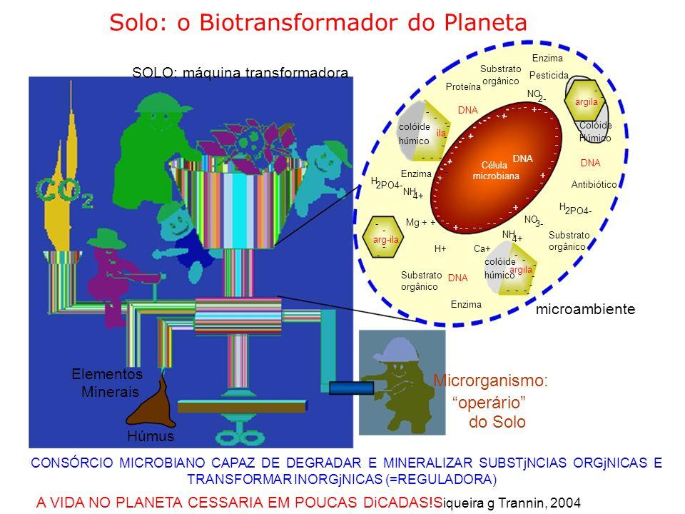 Solo: o Biotransformador do Planeta Enzima Substrato SOLO: máquina transformadora Pesticida orgânico Proteína - NO - 2- argila - -- - DNA + - - - - - - Colóide colóide - - ila - - Húmico húmico - - - --- DNA - Célula - - Enzima microbiana + H - 2PO4- Antibiótico NH - 4+ - + H - 2PO4- - - NO - Mg + + -- + 3- - NH Substrato arg-ila 4+ - H+Ca+ orgânico - - colóide - - argila Substrato húmico - DNA orgânico - --- - Enzima microambiente Elementos Microrganismo: Minerais operário do Solo Húmus CONSÓRCIO MICROBIANO CAPAZ DE DEGRADAR E MINERALIZAR SUBSTjNCIAS ORGjNICAS E TRANSFORMAR INORGjNICAS (=REGULADORA) A VIDA NO PLANETA CESSARIA EM POUCAS DiCADAS!S iqueira g Trannin, 2004