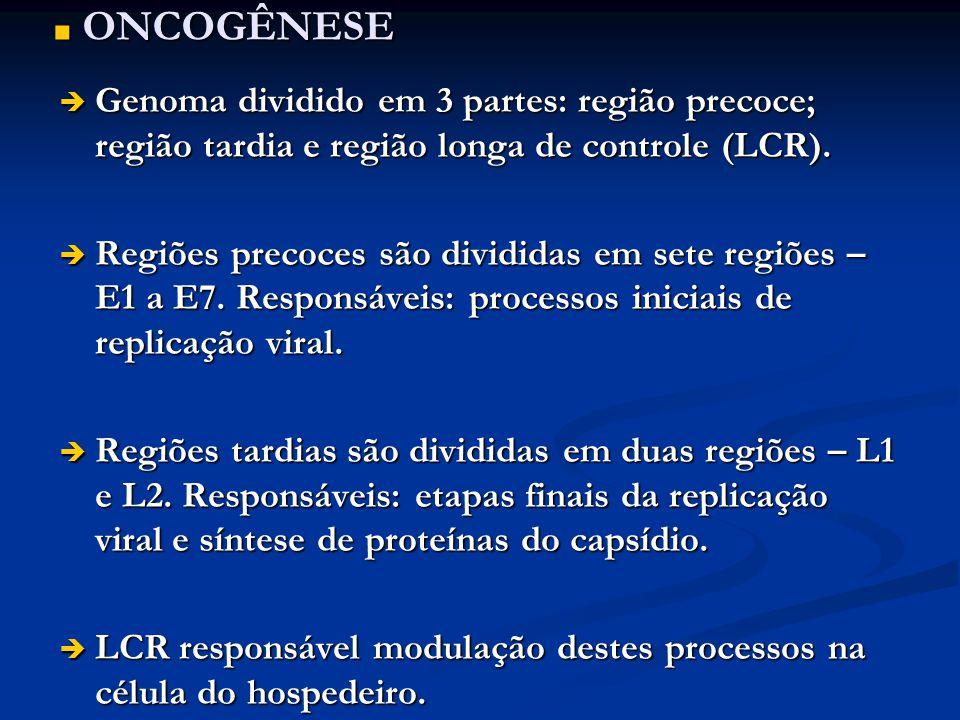 ONCOGÊNESE ONCOGÊNESE Genoma dividido em 3 partes: região precoce; região tardia e região longa de controle (LCR). Genoma dividido em 3 partes: região