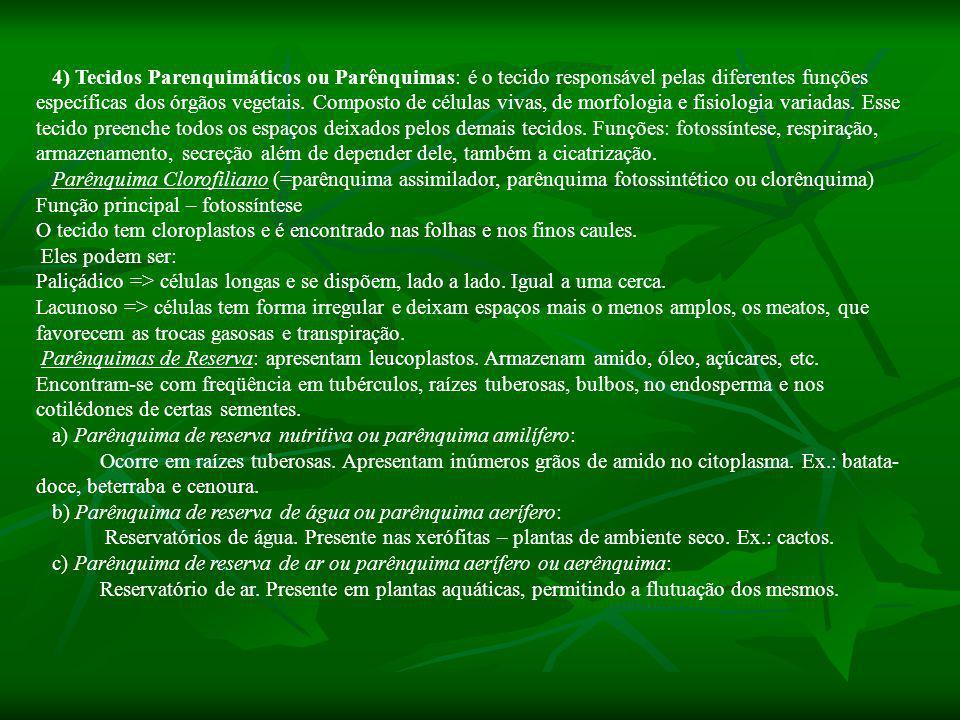 4) Tecidos Parenquimáticos ou Parênquimas: é o tecido responsável pelas diferentes funções específicas dos órgãos vegetais.