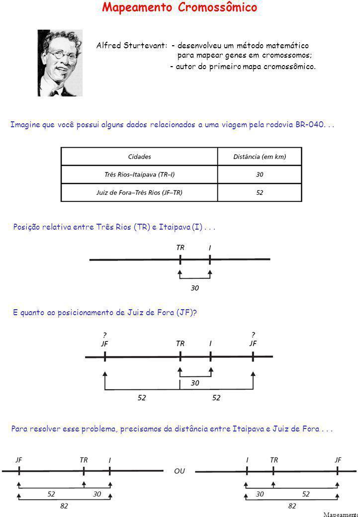 Mapeamento Cromossômico Mapeamento Alfred Sturtevant: - desenvolveu um método matemático para mapear genes em cromossomos; - autor do primeiro mapa cr