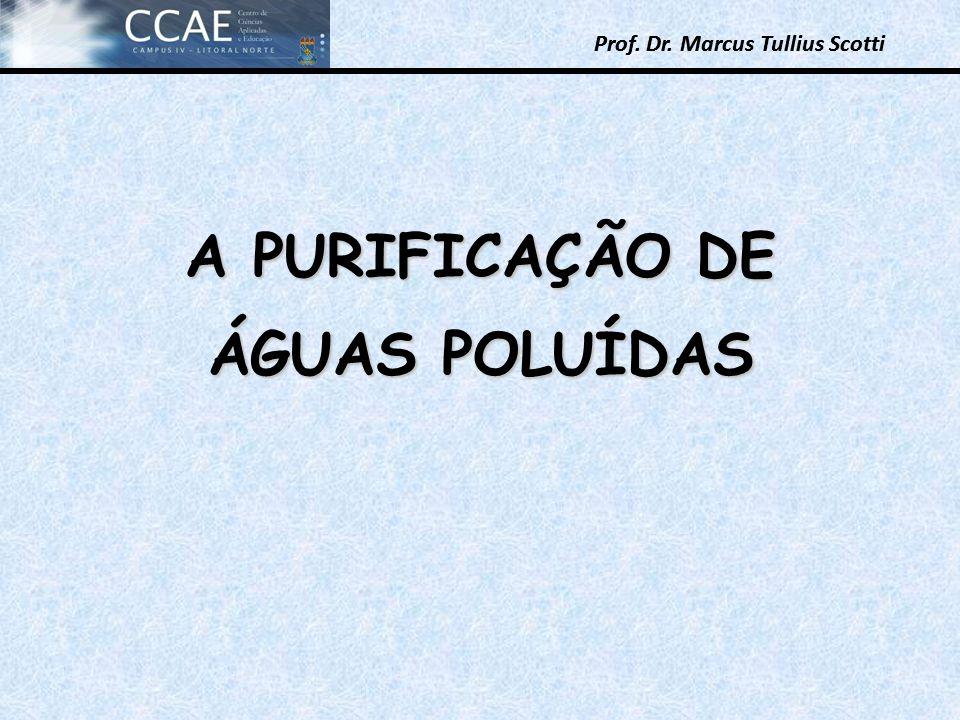 Prof. Dr. Marcus Tullius Scotti Prof. Dr. Marcus Tullius Scotti A PURIFICAÇÃO DE ÁGUAS POLUÍDAS