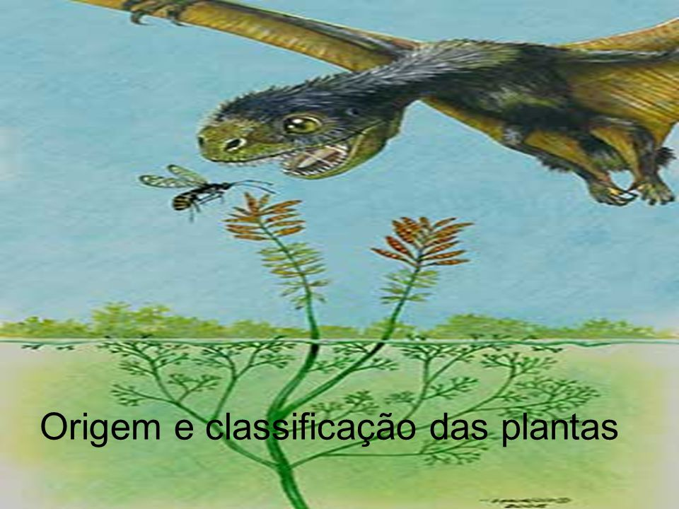 Desde que conquistaram a terra firme, há cerca de 500 milhões de anos, diversas outras plantas dominavam as paisagens.