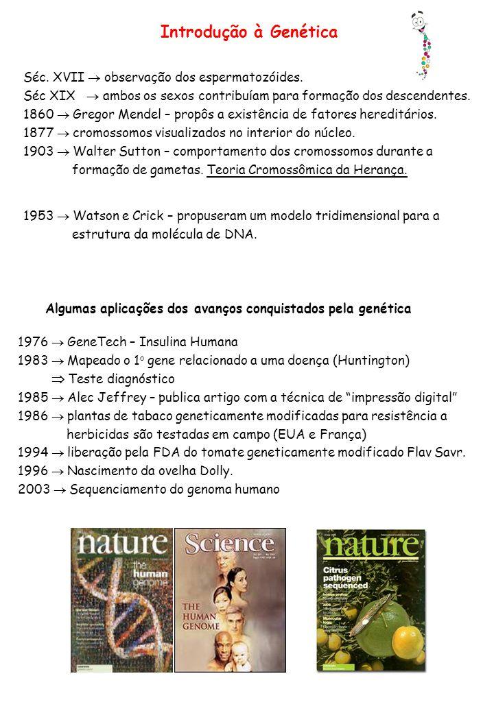 Introdução à Genética Séc. XVII observação dos espermatozóides. Séc XIX ambos os sexos contribuíam para formação dos descendentes. 1860 Gregor Mendel