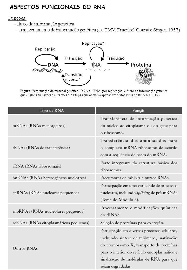 ASPECTOS FUNCIONAIS DO RNA Funções: - fluxo da informação genética - armazenamento de informação genética (ex.TMV, Fraenkel-Conrat e Singer, 1957) Fig