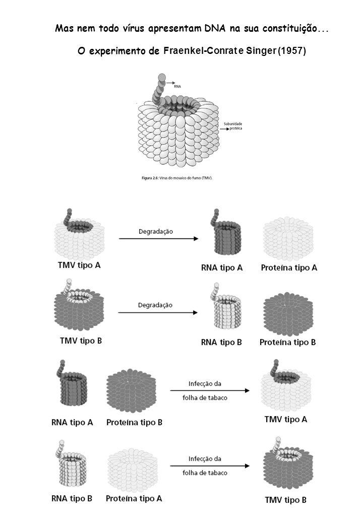 A composição química do DNA Nucleotídeos Açúcar