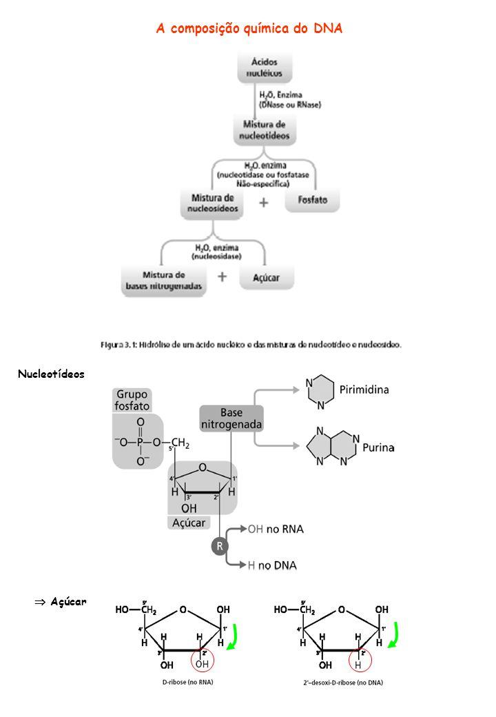 RNAs ribossomais (rRNAs) Representam cerca de 80% do RNA celular total Grandes são menos abundantes (entre 5 e 10% dos RNAs celulares) apresentam grande variação de tamanho geralmente lineares RNA mensageiros (mRNAs) rRNA 5S de E.