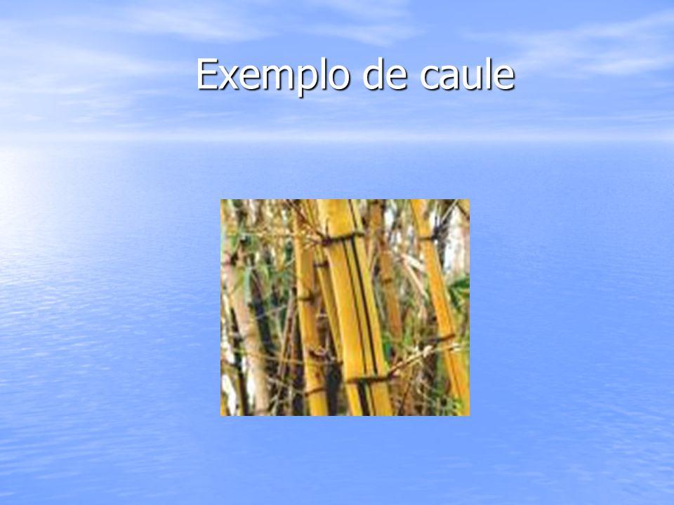 Exemplo de caule Exemplo de caule