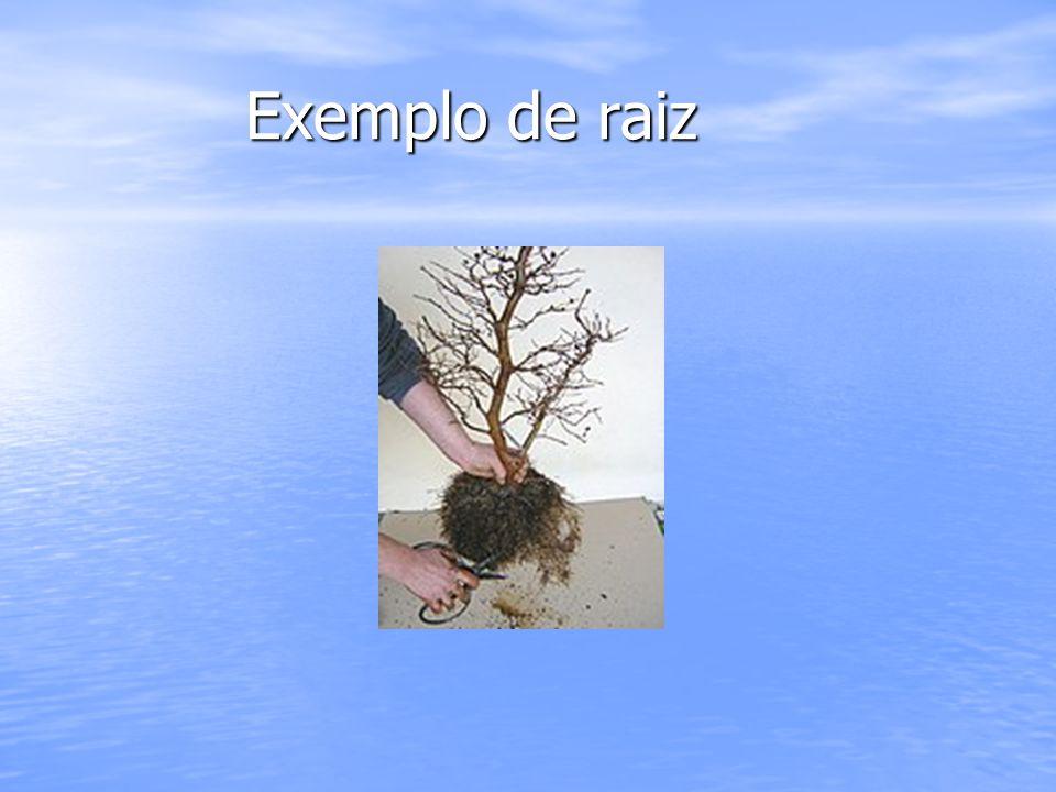 Exemplo de raiz Exemplo de raiz