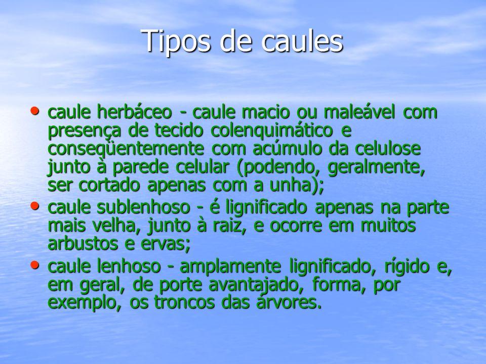 Tipos de caules Tipos de caules caule herbáceo - caule macio ou maleável com presença de tecido colenquimático e conseqüentemente com acúmulo da celul