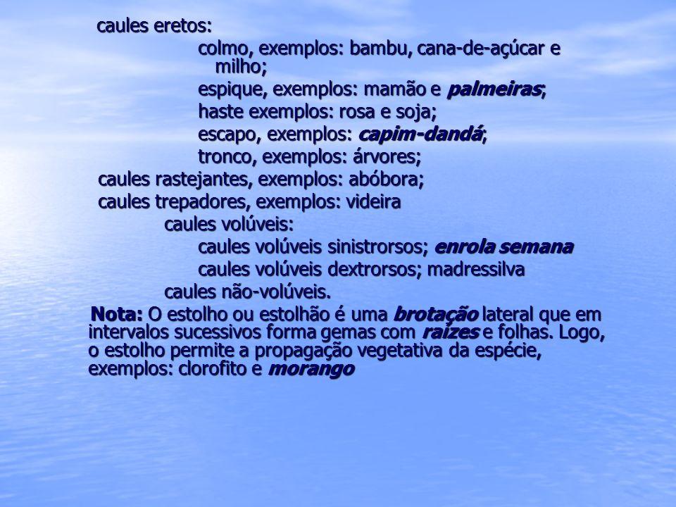 Caules subterrâneos bulbo sólido ou cheio, exemplo: açafrão; bulbo sólido ou cheio, exemplo: açafrão; bulbo escamoso, exemplos: açucena e lírio; bulbo tunicado, exemplo: cebola; bulbo composto ou bulbilho, exemplo: alho e gladíolo ou palma-de-santa-rita; rizoma, exemplos: banana, espada-de- são-jorge e orquídea; rizoma, exemplos: banana, espada-de- são-jorge e orquídea; tubérculo, exemplos: batata, cará e inhame.