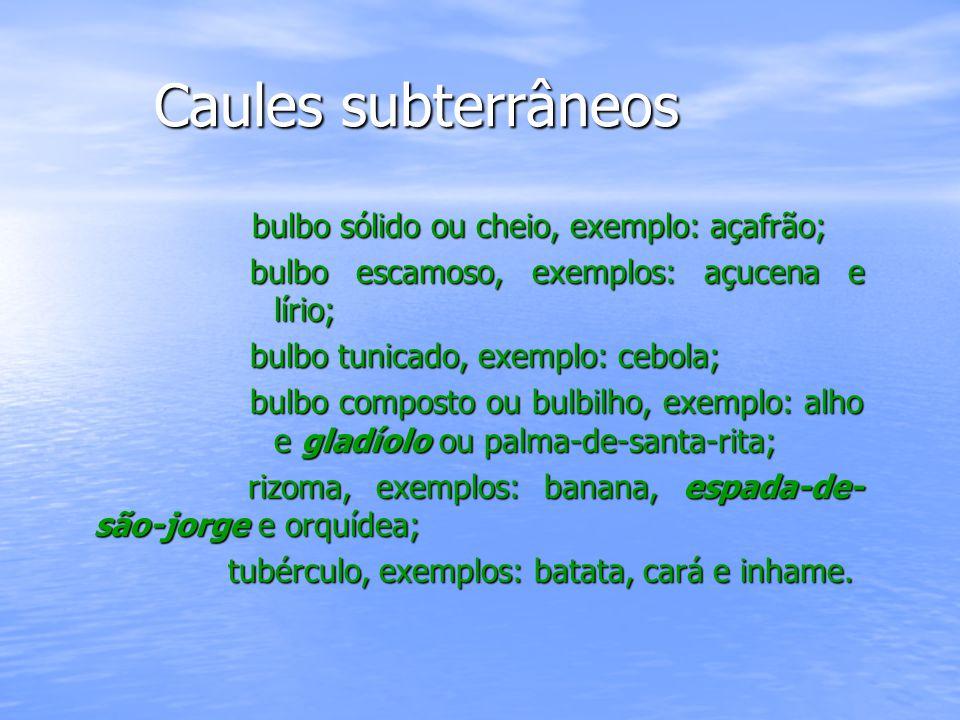 Caules aquáticos Caules aquáticos São considerados caules aquáticos todos aqueles que se desenvolvem em meio aquoso, exemplos: elódea, vitória- régia e outras plantas ornamentais aquáticas.