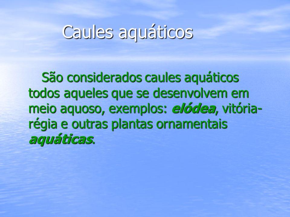 Caules aquáticos Caules aquáticos São considerados caules aquáticos todos aqueles que se desenvolvem em meio aquoso, exemplos: elódea, vitória- régia