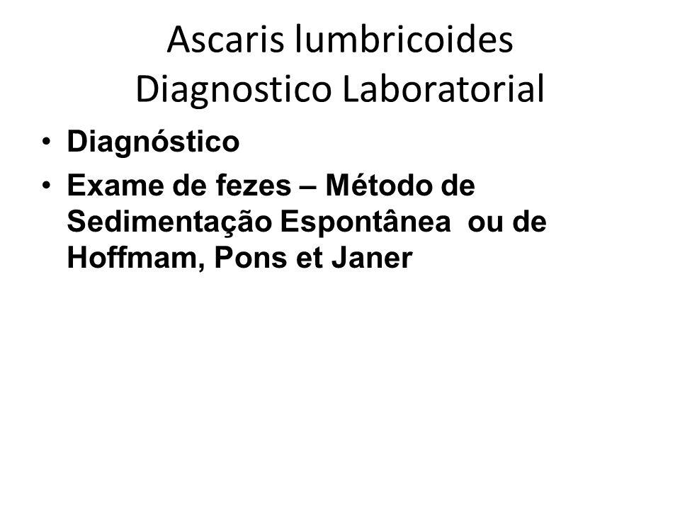 Ascaris lumbricoides Diagnostico Laboratorial Diagnóstico Exame de fezes – Método de Sedimentação Espontânea ou de Hoffmam, Pons et Janer