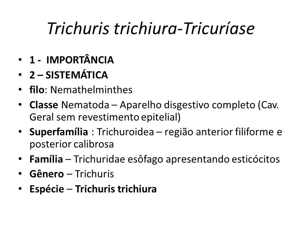 Trichuris trichiura-Tricuríase 1 - IMPORTÂNCIA 2 – SISTEMÁTICA filo: Nemathelminthes Classe Nematoda – Aparelho disgestivo completo (Cav. Geral sem re
