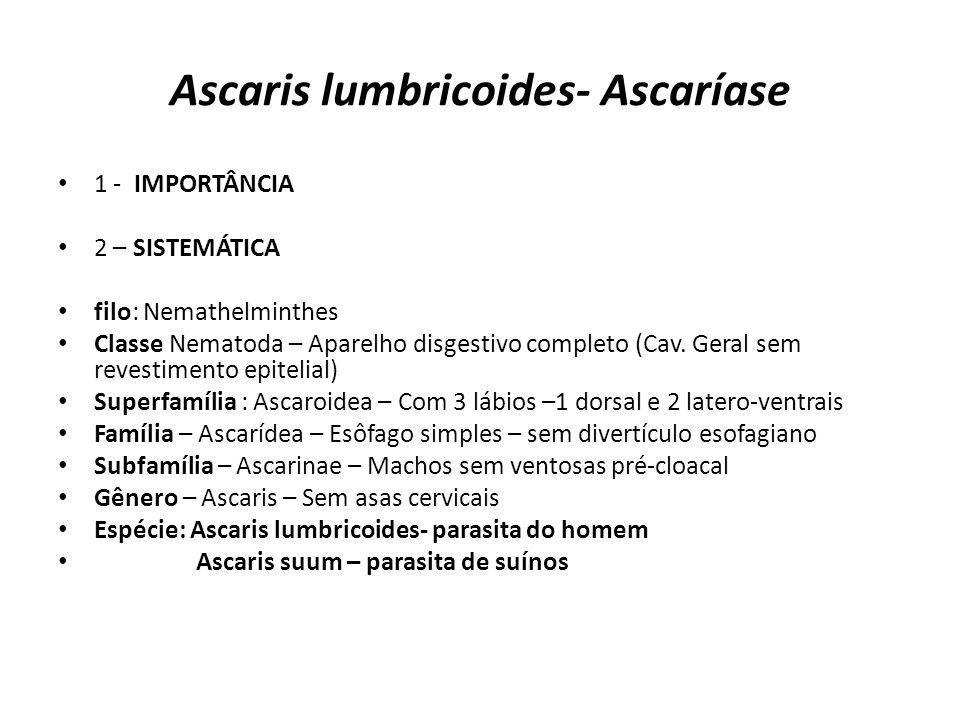 Ascaris lumbricoides- Ascaríase 1 - IMPORTÂNCIA 2 – SISTEMÁTICA filo: Nemathelminthes Classe Nematoda – Aparelho disgestivo completo (Cav. Geral sem r