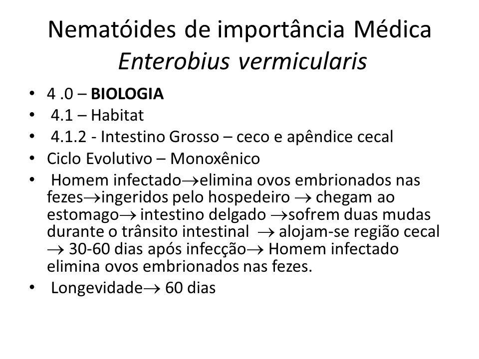Nematóides de importância Médica Enterobius vermicularis 4.0 – BIOLOGIA 4.1 – Habitat 4.1.2 - Intestino Grosso – ceco e apêndice cecal Ciclo Evolutivo