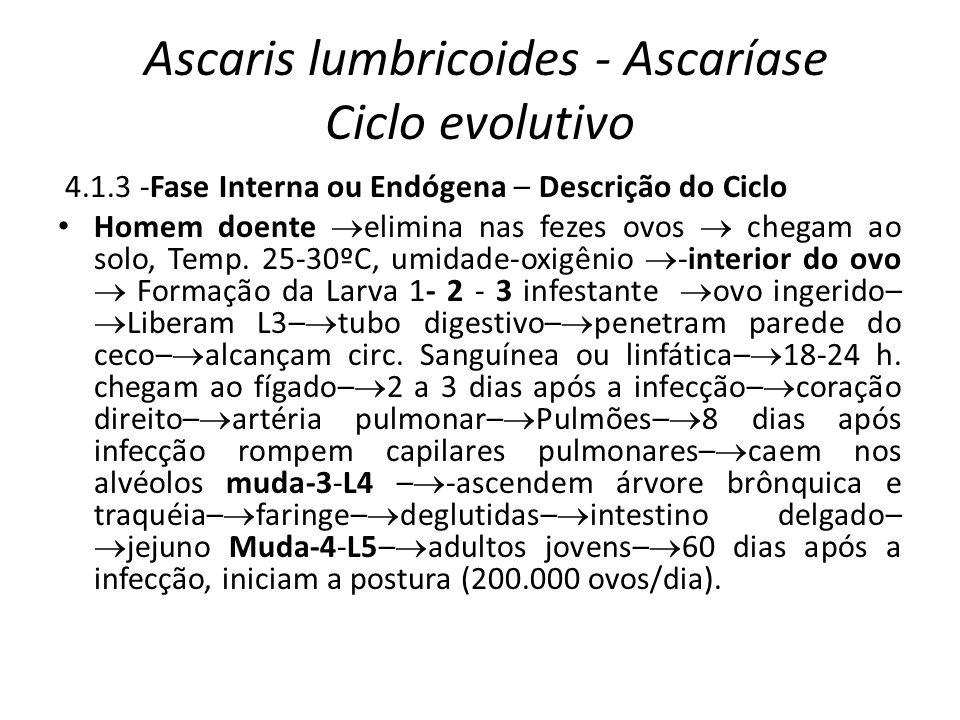 Ascaris lumbricoides - Ascaríase Ciclo evolutivo 4.1.3 -Fase Interna ou Endógena – Descrição do Ciclo Homem doente elimina nas fezes ovos chegam ao so