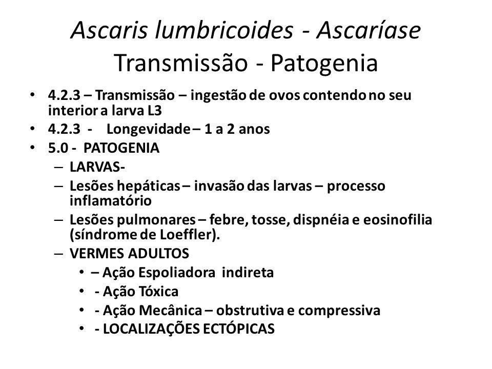 Ascaris lumbricoides - Ascaríase Transmissão - Patogenia 4.2.3 – Transmissão – ingestão de ovos contendo no seu interior a larva L3 4.2.3 - Longevidad