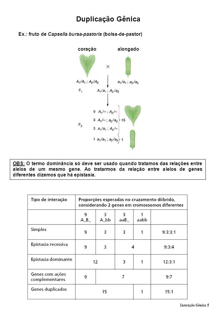 Duplicação Gênica Ex.: fruto de Capsella bursa-pastoris (bolsa-de-pastor) coração alongado OBS: O termo dominância só deve ser usado quando tratamos d