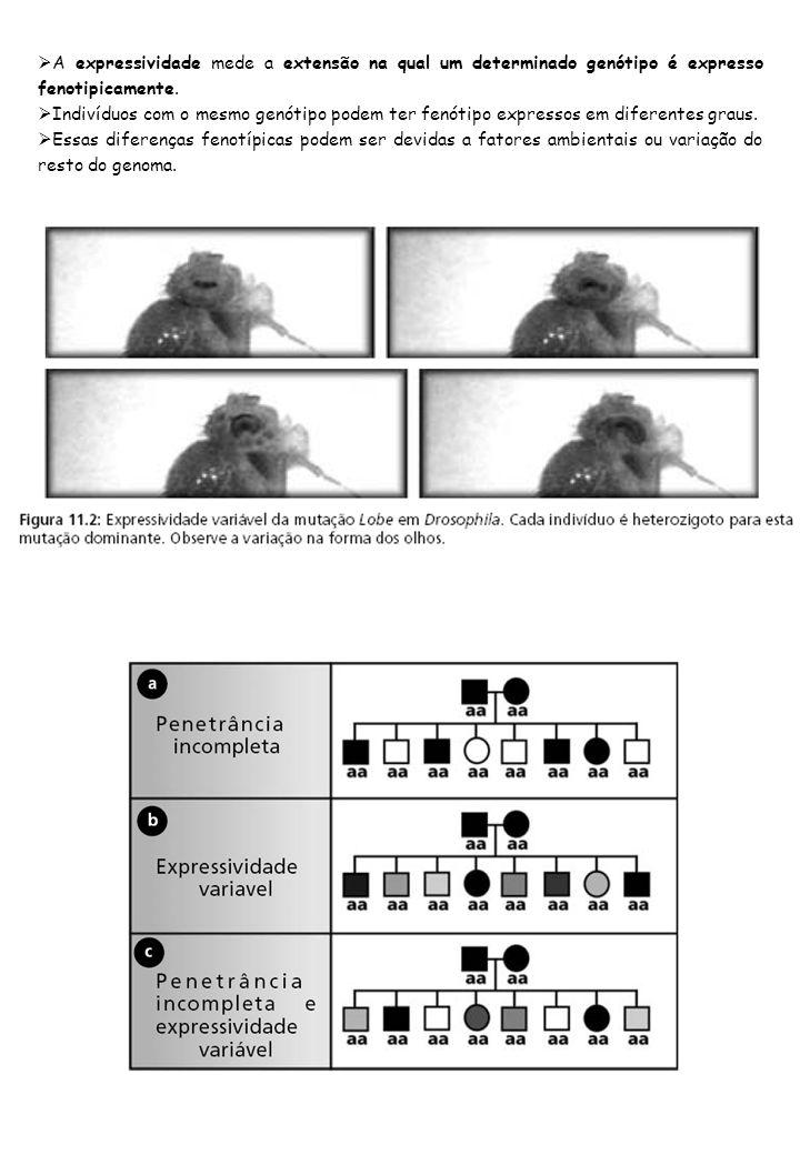 A expressividade mede a extensão na qual um determinado genótipo é expresso fenotipicamente. Indivíduos com o mesmo genótipo podem ter fenótipo expres