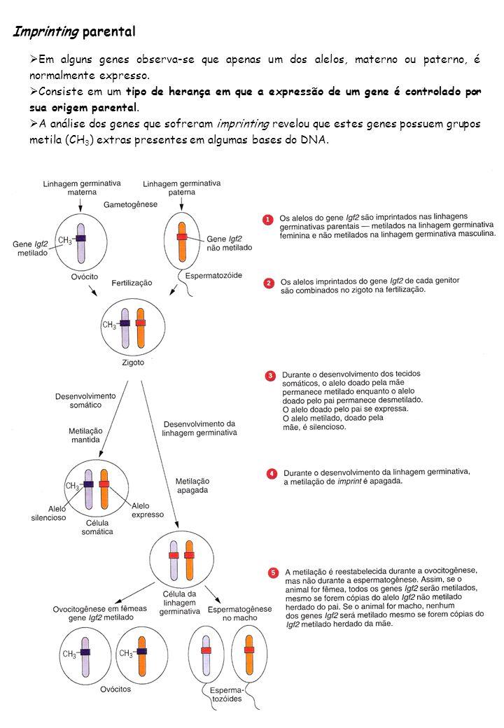 Imprinting parental Em alguns genes observa-se que apenas um dos alelos, materno ou paterno, é normalmente expresso. Consiste em um tipo de herança em