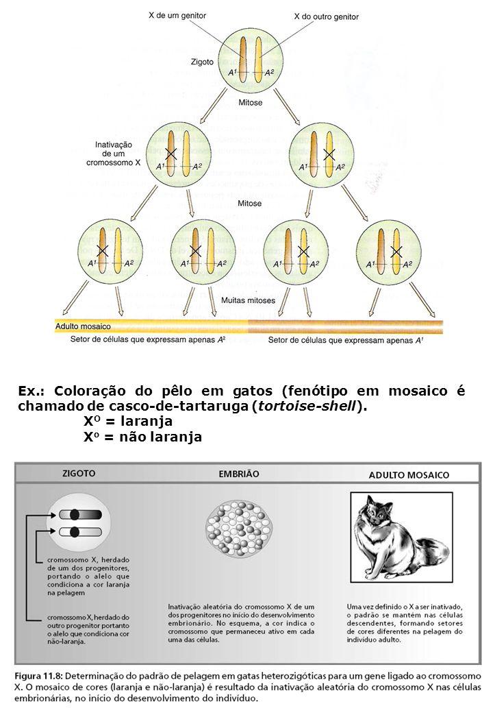 Ex.: Coloração do pêlo em gatos (fenótipo em mosaico é chamado de casco-de-tartaruga (tortoise-shell). X O = laranja X o = não laranja