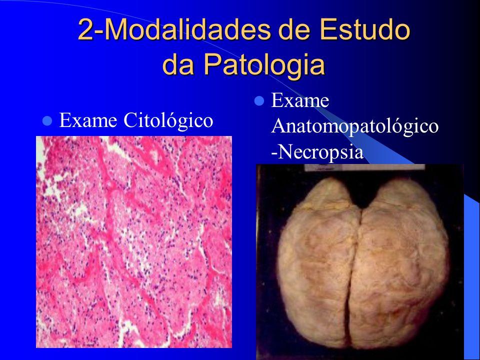 2-Modalidades de Estudo da Patologia Exame Citológico Exame Anatomopatológico -Necropsia