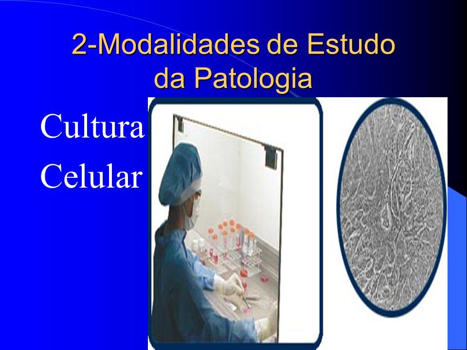 2-Modalidades de Estudo da Patologia Cultura Celular