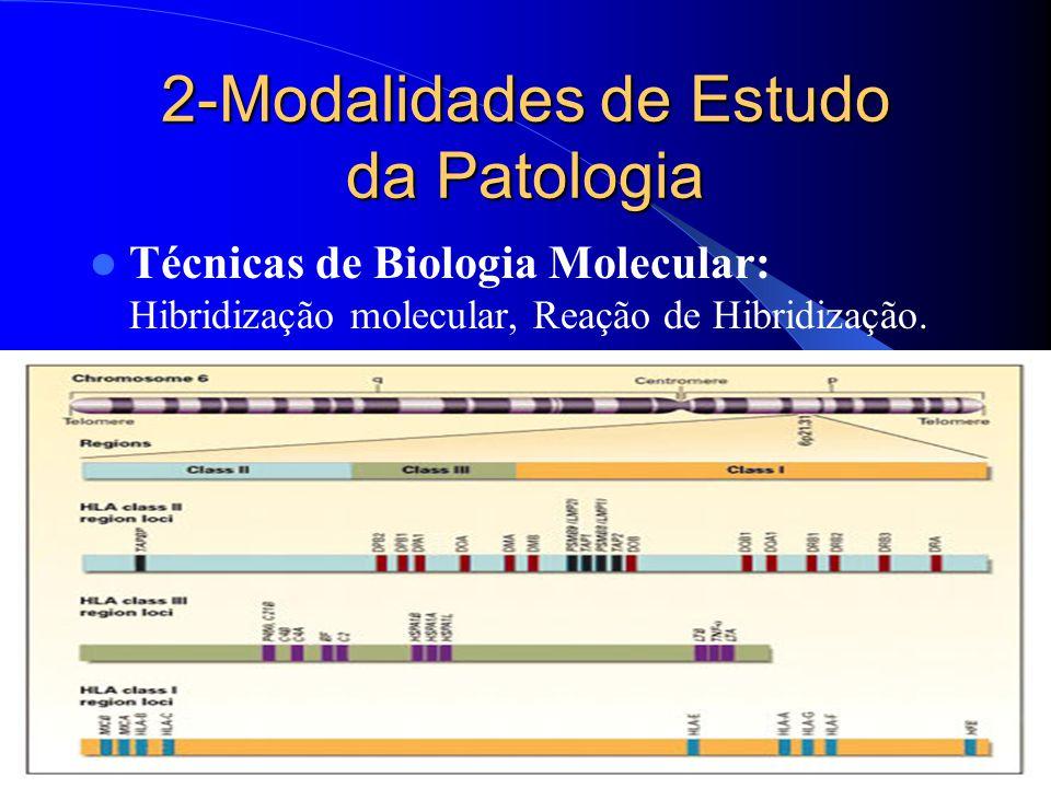 2-Modalidades de Estudo da Patologia Técnicas de Biologia Molecular: Hibridização molecular, Reação de Hibridização.