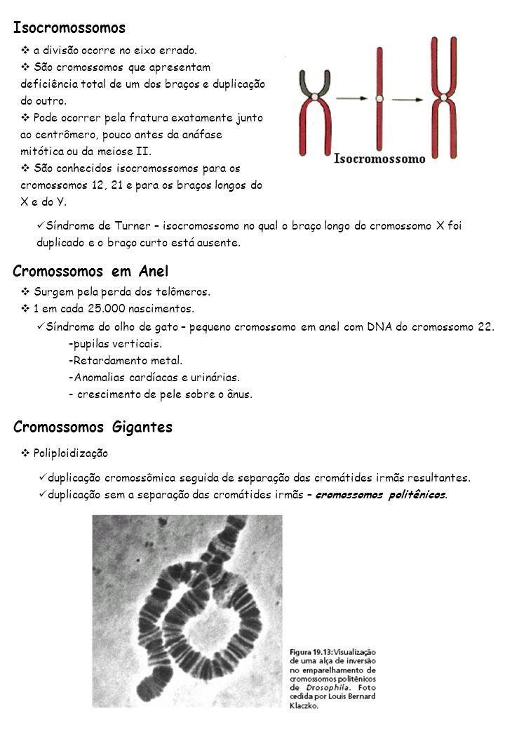 Cromossomos Gigantes Poliploidização duplicação cromossômica seguida de separação das cromátides irmãs resultantes. duplicação sem a separação das cro