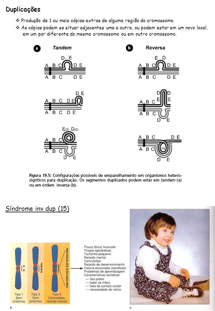 Duplicações Produção de 1 ou mais cópias extras de alguma região do cromossomo. As cópias podem se situar adjacentes uma a outra, ou podem estar em um