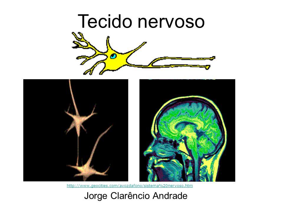 Tecido nervoso Sistema Nervoso DivisãoPartesFunções gerais Sistema nervoso central (SNC) Encéfalo e Medula espinhal Processamento e integração de informações Sistema nervoso periférico (SNP) Nervos e Gânglios Condução de informações entre órgãos receptores de estímulos, o SNC e órgãos efetuadores (músculos, glândulas...) http://www.geocities.com/avozdafono/sistema%20nervoso.htm Divisão Anatômica Sistema Nervoso Central: Massa branca e cinzenta (encéfalo e medula espinhal) Sistema Nervoso Periférico; gânglios nervosos (motor e autônomo-simpático e parassimpático) Componentes principais de tecido nervoso: Neurônios Células da glia