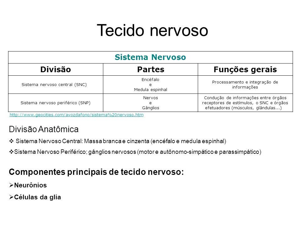 Tecido nervoso Sistema Nervoso DivisãoPartesFunções gerais Sistema nervoso central (SNC) Encéfalo e Medula espinhal Processamento e integração de info