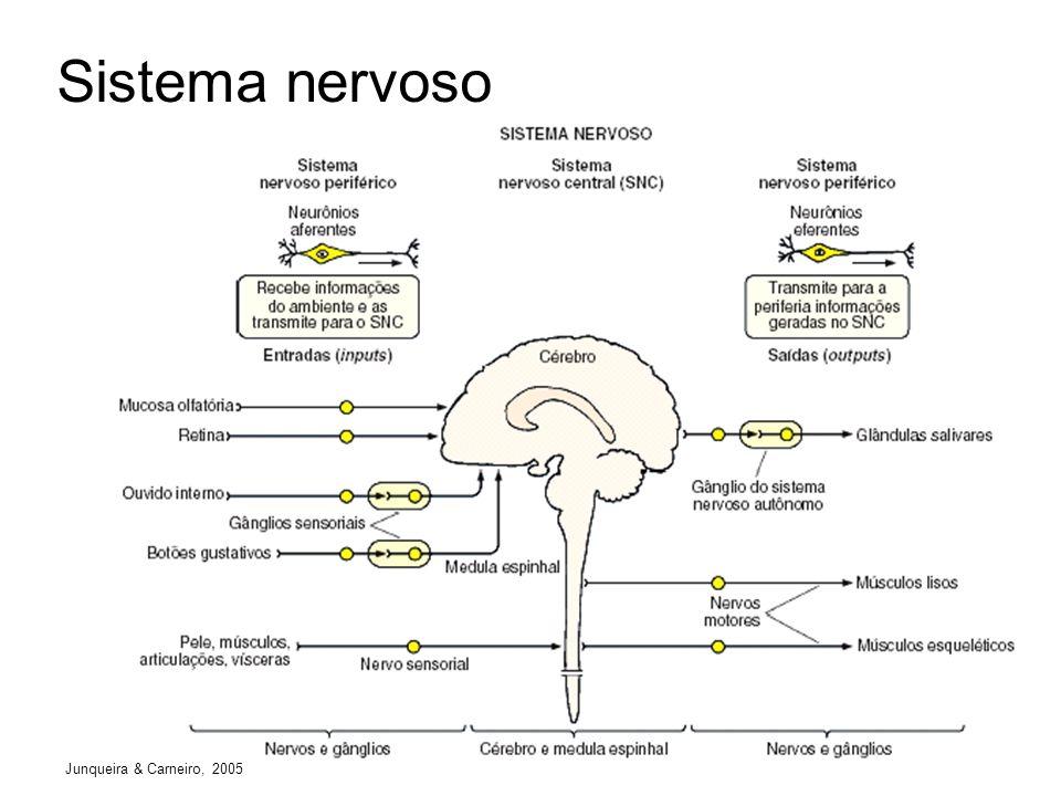 Comunicação sináptica Junqueira & Carneiro, 2005