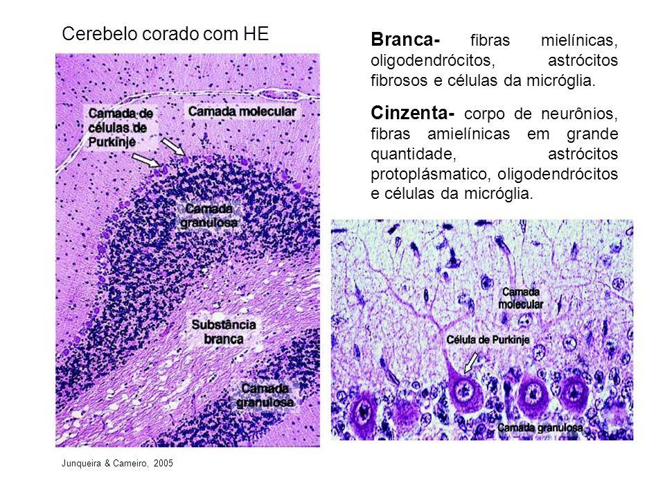 Cerebelo corado com HE Branca- fibras mielínicas, oligodendrócitos, astrócitos fibrosos e células da micróglia. Cinzenta- corpo de neurônios, fibras a