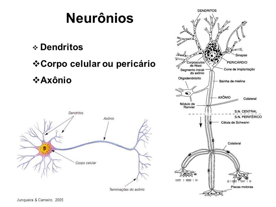Neurônios Dendritos Corpo celular ou pericário Axônio Junqueira & Carneiro, 2005