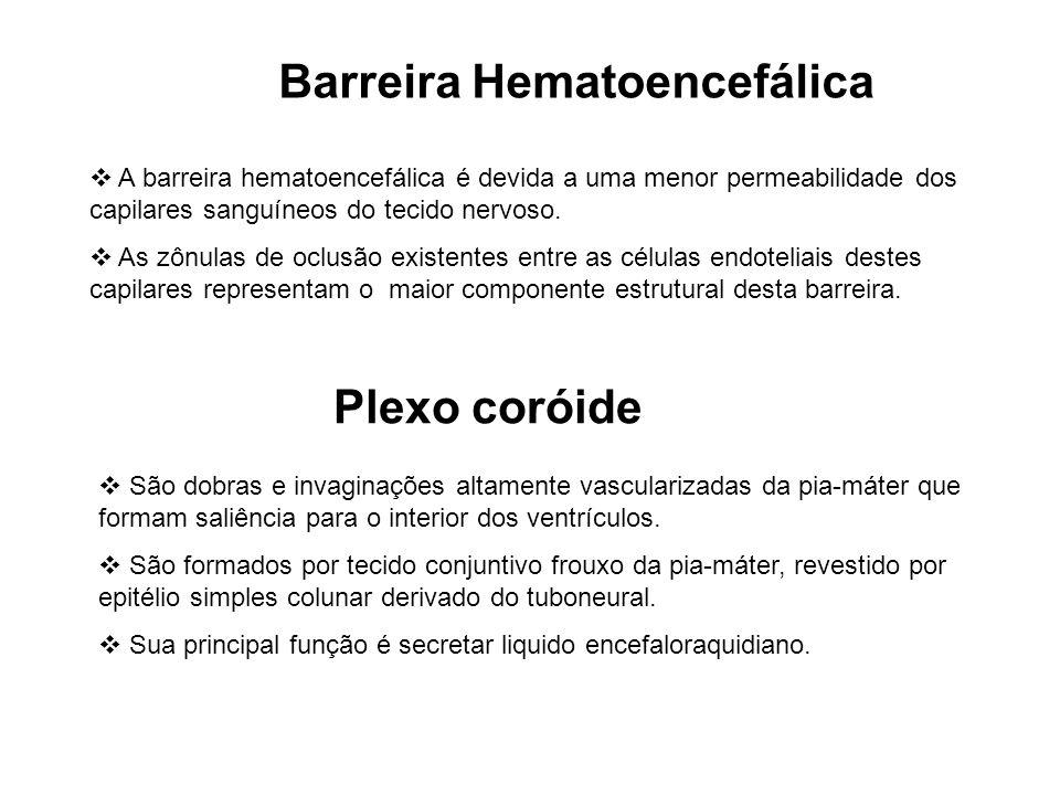 Barreira Hematoencefálica A barreira hematoencefálica é devida a uma menor permeabilidade dos capilares sanguíneos do tecido nervoso. As zônulas de oc