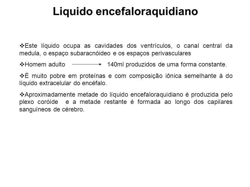 Liquido encefaloraquidiano Este líquido ocupa as cavidades dos ventrículos, o canal central da medula, o espaço subaracnóideo e os espaços perivascula