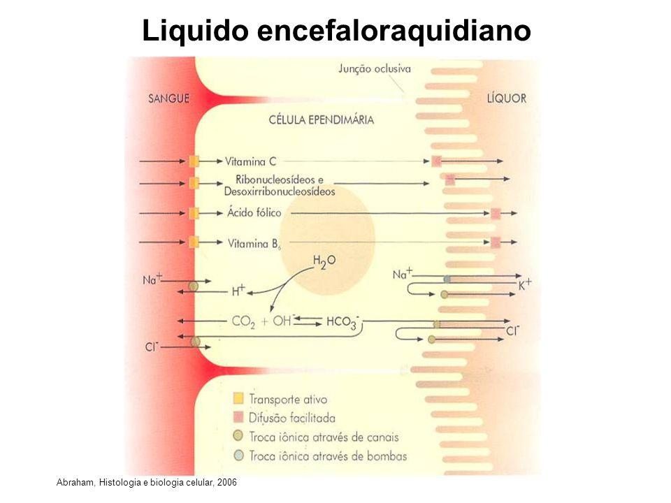 Liquido encefaloraquidiano Abraham, Histologia e biologia celular, 2006