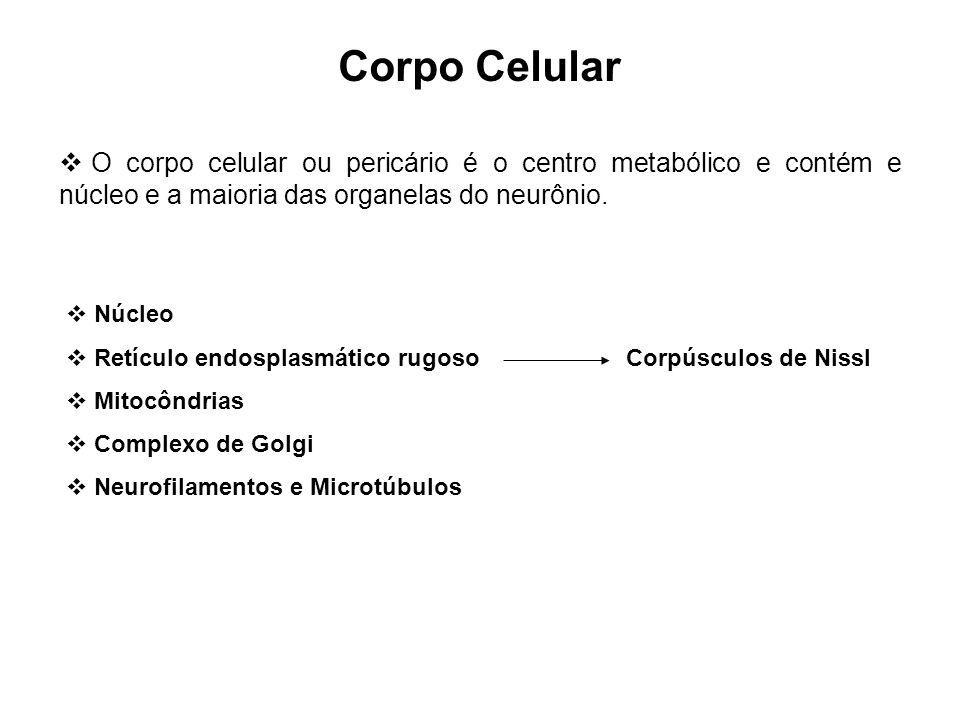 Corpo Celular O corpo celular ou pericário é o centro metabólico e contém e núcleo e a maioria das organelas do neurônio. Núcleo Retículo endosplasmát