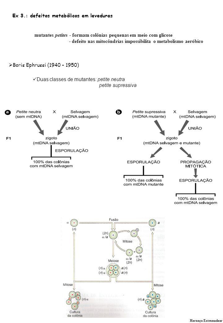 Herança Extranuclear DOENÇAS MITOCONDRIAIS HUMANAS Doenças provenientes de defeitos em genes do genoma mitocondrial são transmitidas como as próprias mitocôndrias, isto é, da mãe para toda a prole, independente do sexo; Entretanto uma criança pode herdar de sua mãe mais que um tipo de genoma mitocondrial (heteroplasmia).
