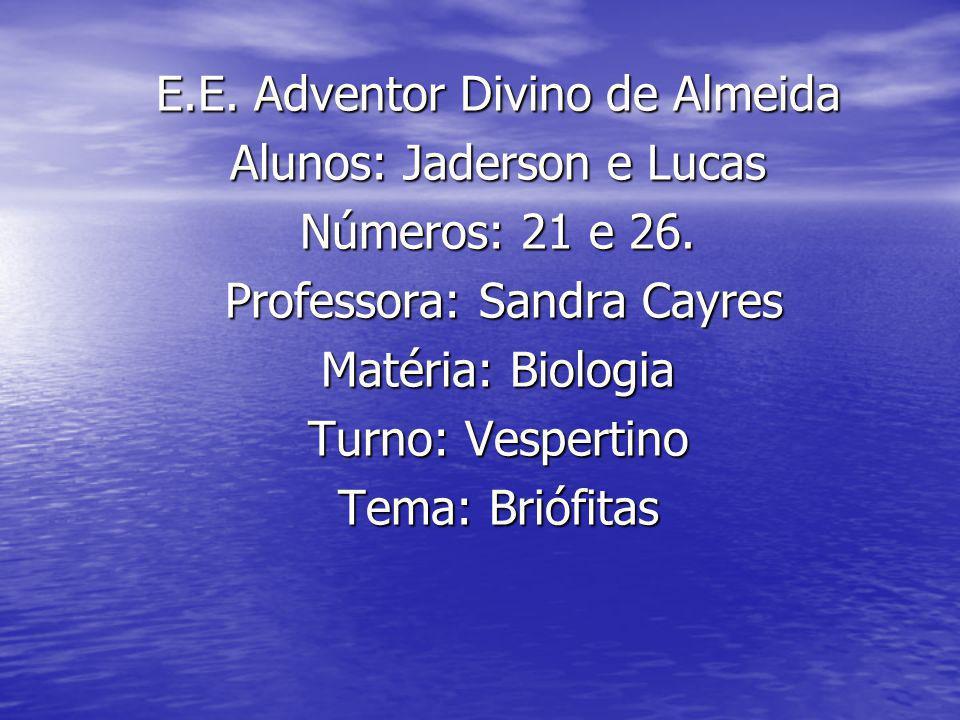 E.E.Adventor Divino de Almeida Alunos: Jaderson e Lucas Números: 21 e 26.