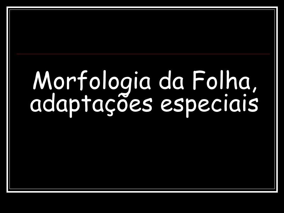 Morfologia da Folha, adaptações especiais