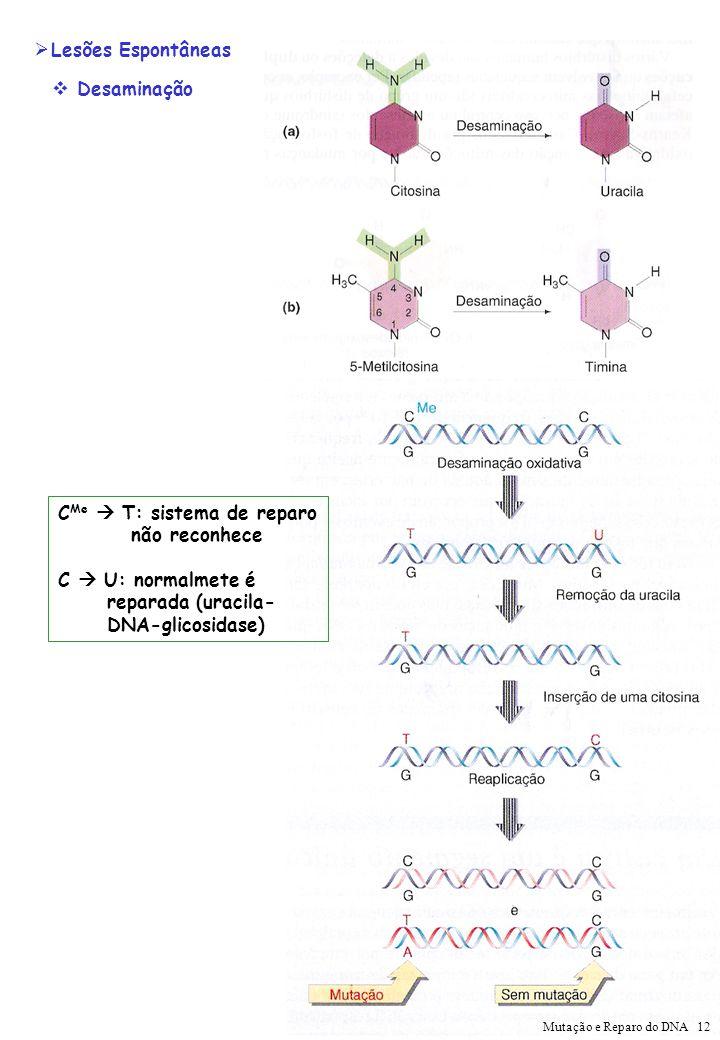 Desaminação Lesões Espontâneas C Me T: sistema de reparo não reconhece C U: normalmete é reparada (uracila- DNA-glicosidase) Mutação e Reparo do DNA 1