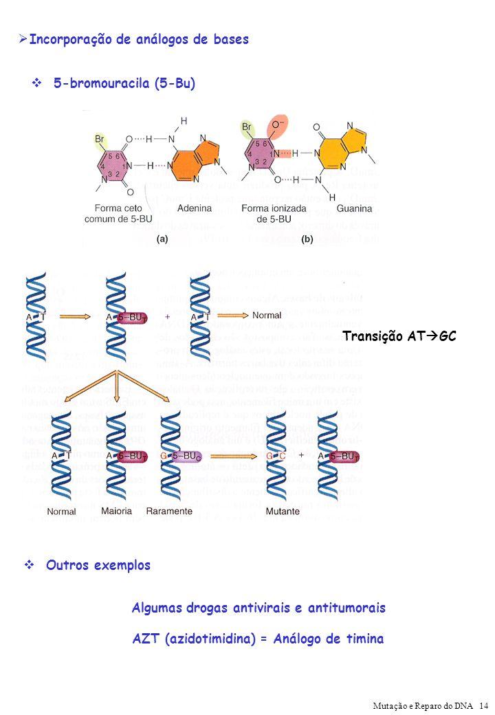 Incorporação de análogos de bases 5-bromouracila (5-Bu) Transição AT GC Outros exemplos Algumas drogas antivirais e antitumorais AZT (azidotimidina) =