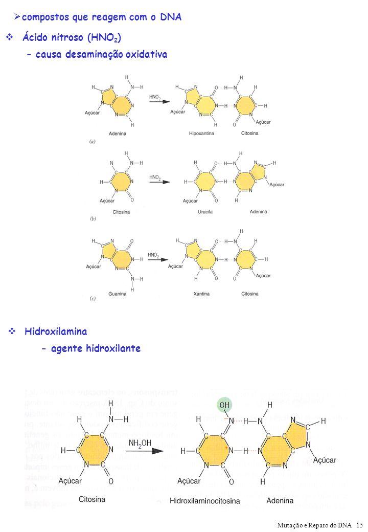 compostos que reagem com o DNA Ácido nitroso (HNO 2 ) - causa desaminação oxidativa Hidroxilamina - agente hidroxilante Mutação e Reparo do DNA 15