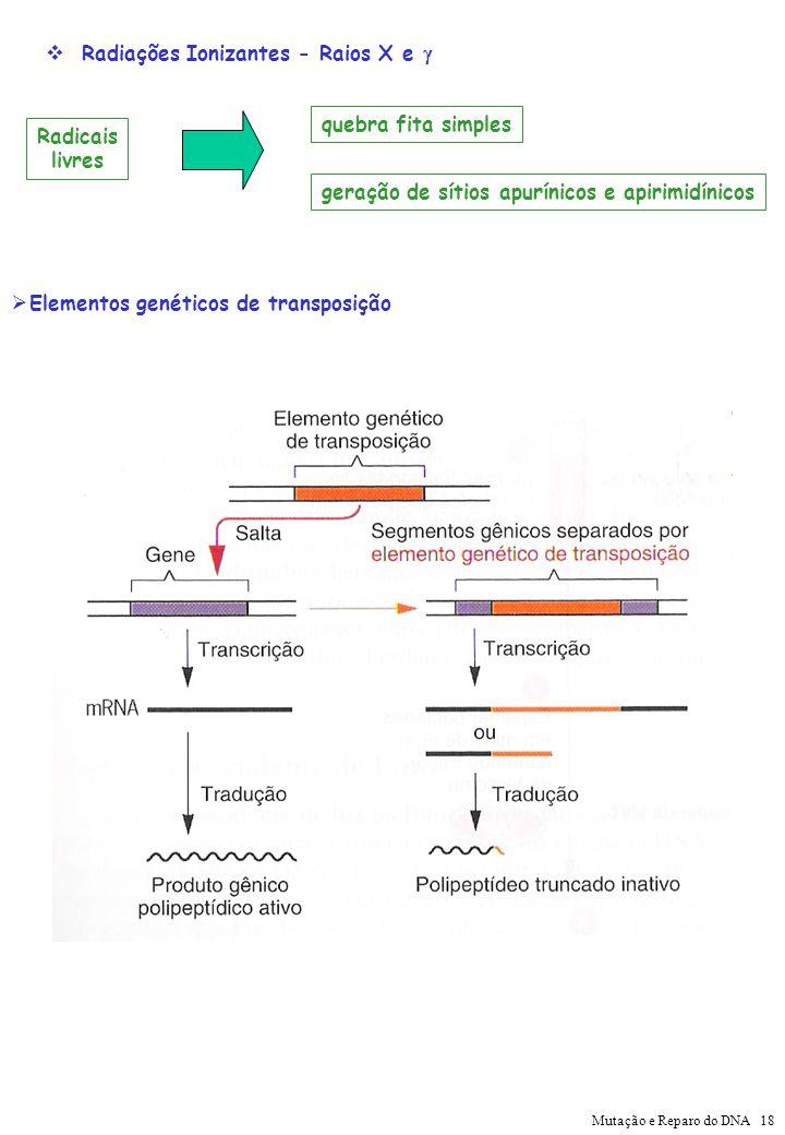 Radiações Ionizantes - Raios X e Radicais livres quebra fita simples geração de sítios apurínicos e apirimidínicos Elementos genéticos de transposição
